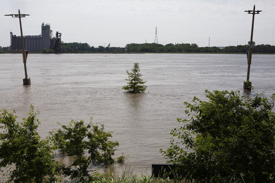 A tree along Leonor K Sullivan Blvd. is surrounded by rising water as the Mississippi River reaches a near-record height.