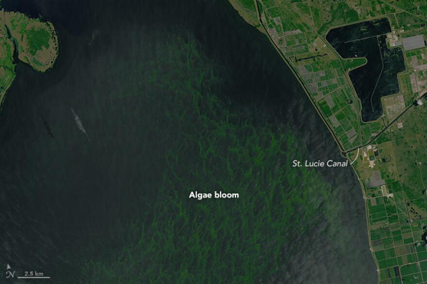 Algae in Lake Okeechobee