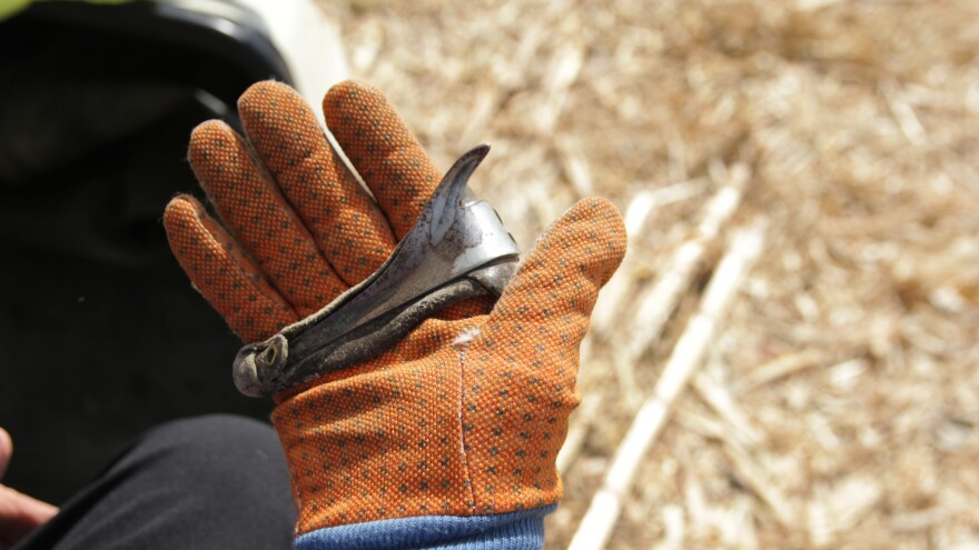 Ardith Clair shows the glove and hook she uses to husk at the Illinois State Corn Husking Competition.