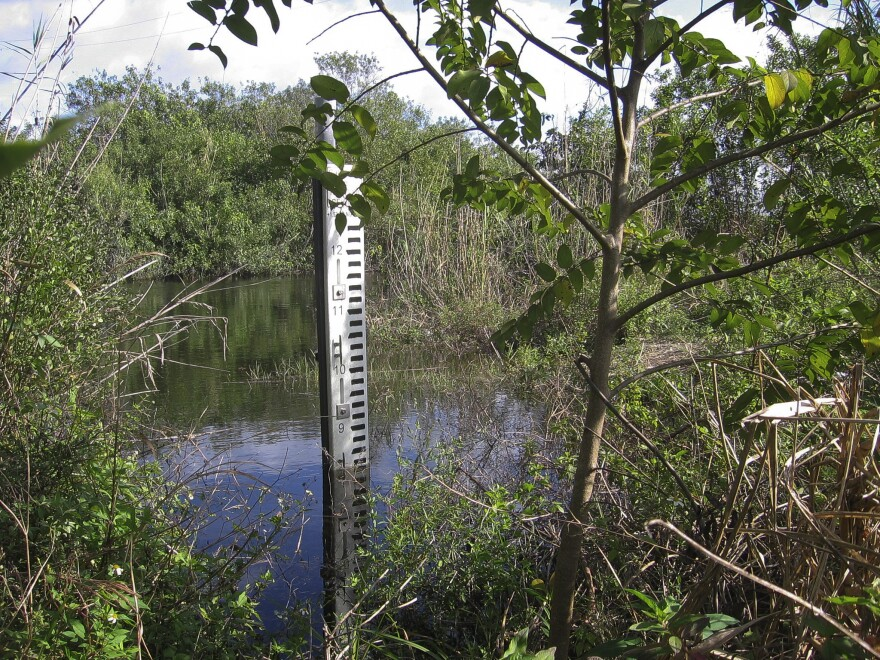 A water marker south of Tamiami Trail shows the current level, about 7.5 feet. Park hydrologists say that level will rise to nearly 10 feet, once the next phase of Everglades restoration is complete.
