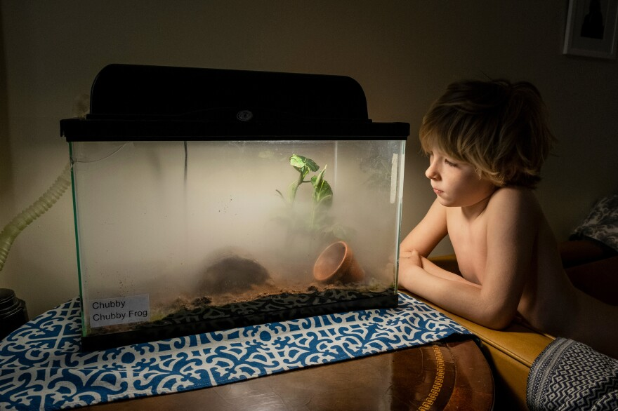Errol Sleeper, 6, looks into Chubby the frog's tank while Chubby receives a daily mist to keep her skin moist.