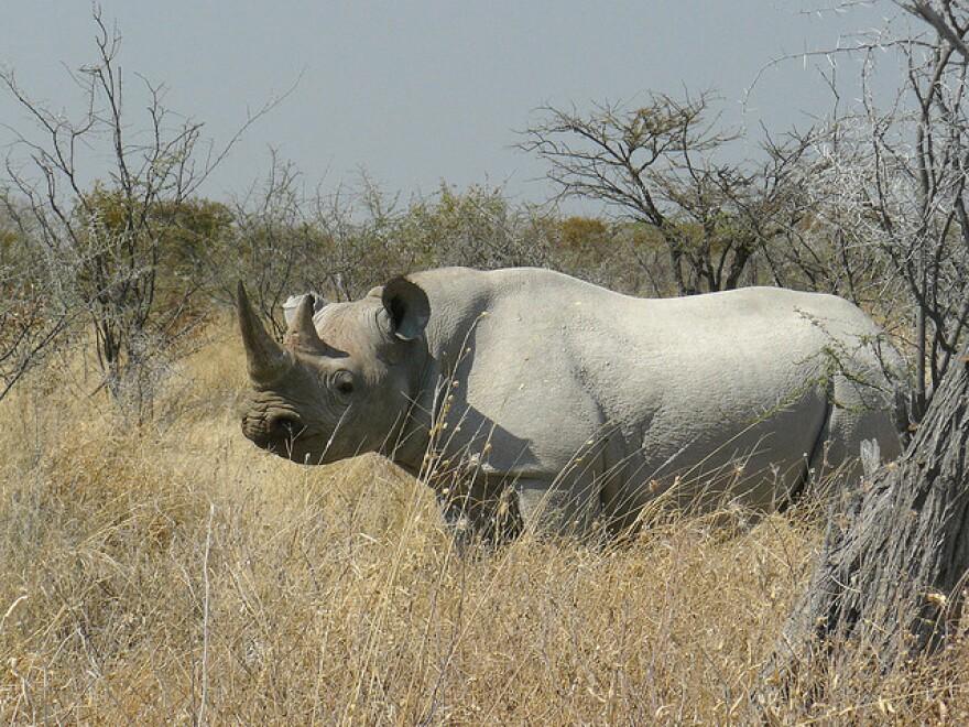 Black_Rhino.jpg