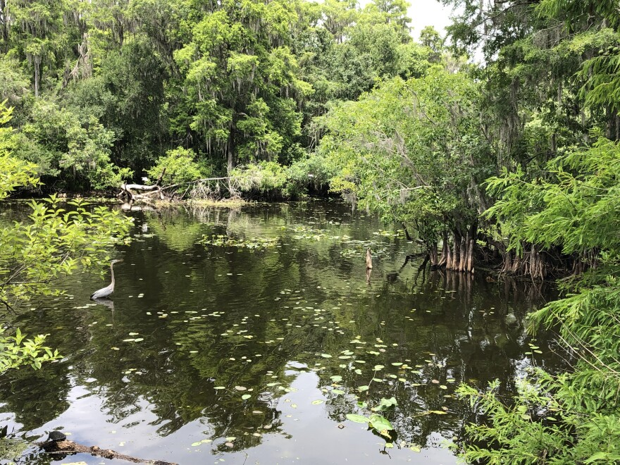 6-25-19_lettuce_lake_park.jpg