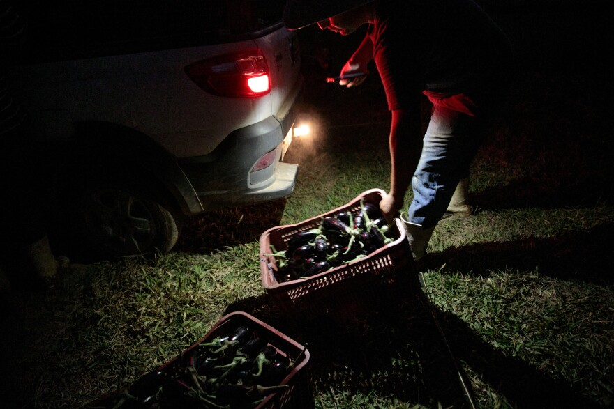 Eggplants are loaded into Rafael Duckur's truck at night in Morungaba.