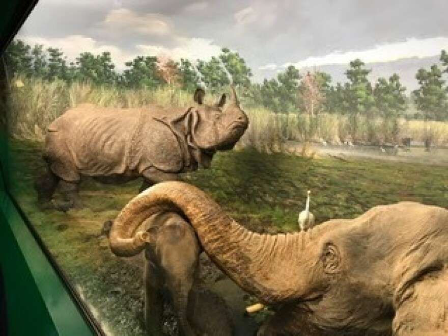 A diorama at the natural history museum in Milan.