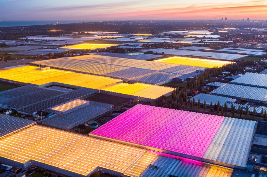 The amber and fuchsia lights of the Koppert Cress greenhouses in the Netherlands were designed to maximize plant growth efficiency and minimize light pollution.