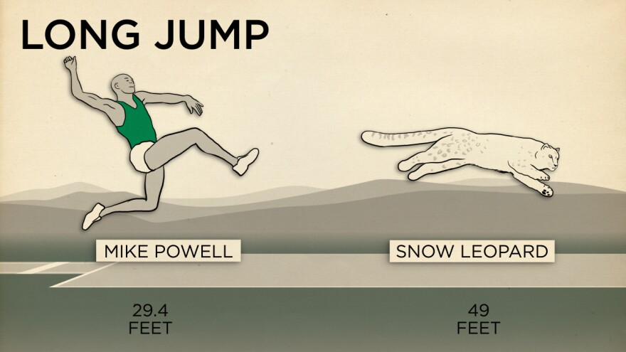 Humans aren't very good at jumping.