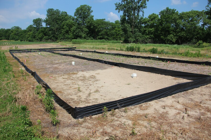 Soon after he returned to Ohio State University in the late 1980s, Rattan Lal laid out these research plots to study the capacity of soil to store carbon.