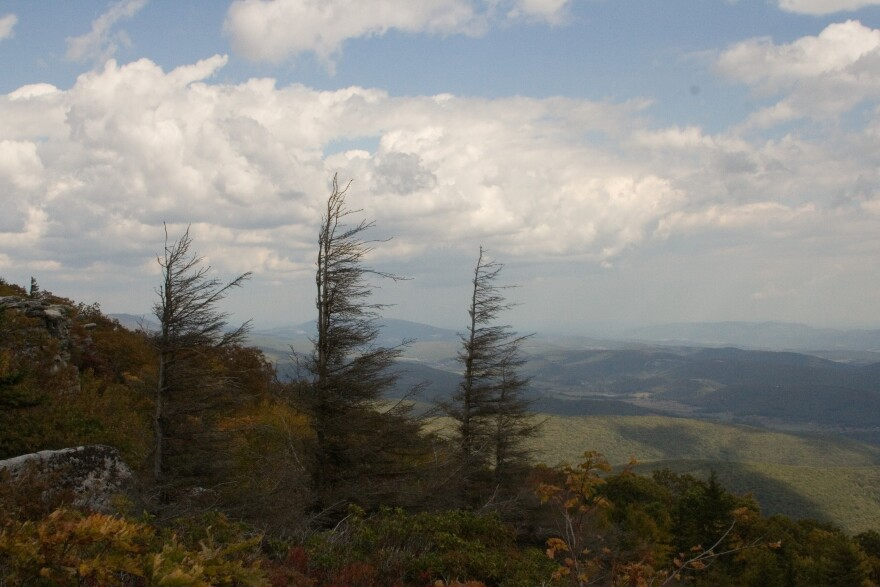 Dolly Sods, spruce trees, landscape of valley below