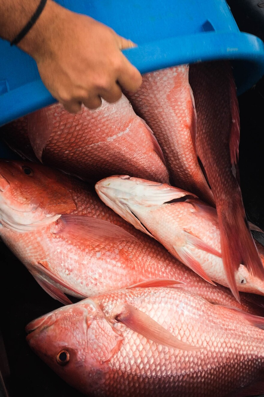 Recreational fishermen say red snapper are abundant in the Gulf of Mexico and question the stock assessments behind strict government quotas on the catch.
