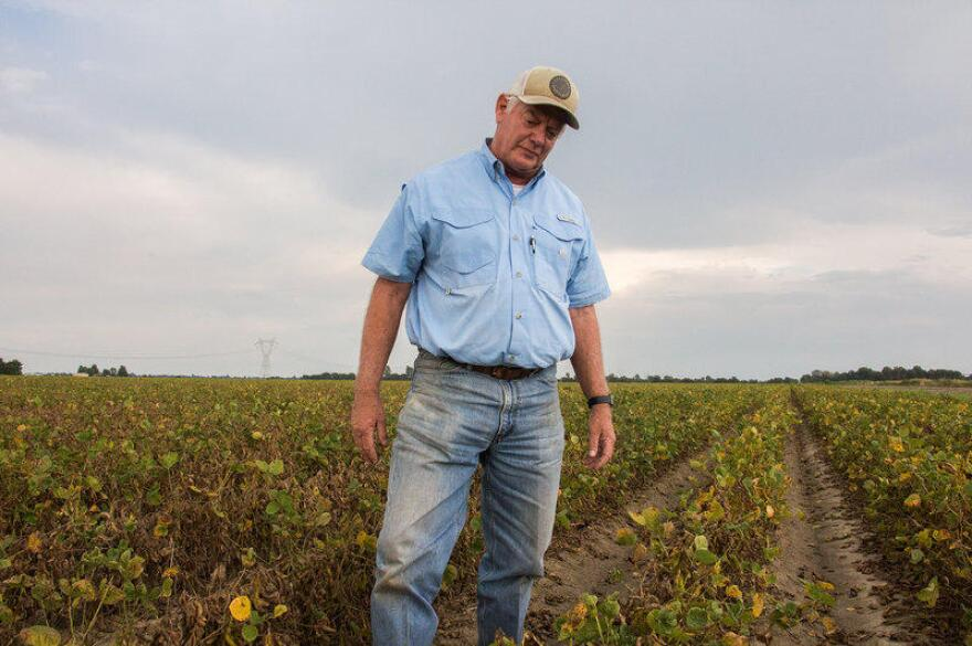 File photo of David Wildy, a prominent Arkansas farmer, in a field of soybeans that were damaged by dicamba.
