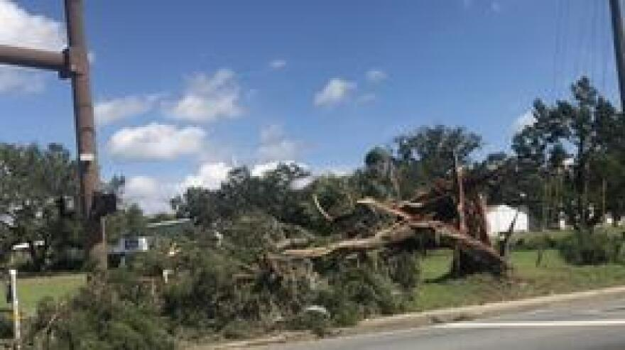 Downed trees across North Florida are the new normal following Hurricane Michael. (October 2018)