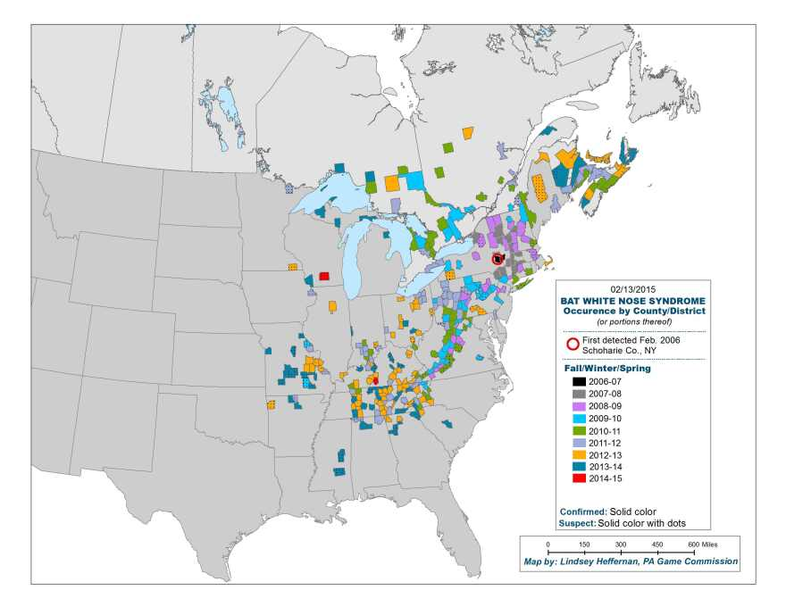 As of this winter, white-nose syndrome has spread to 25 U.S. states and five Canadian provinces.