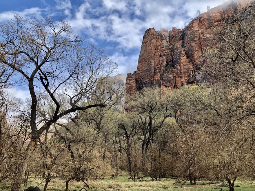 Photo of trees and a cliff side at Zion National Park
