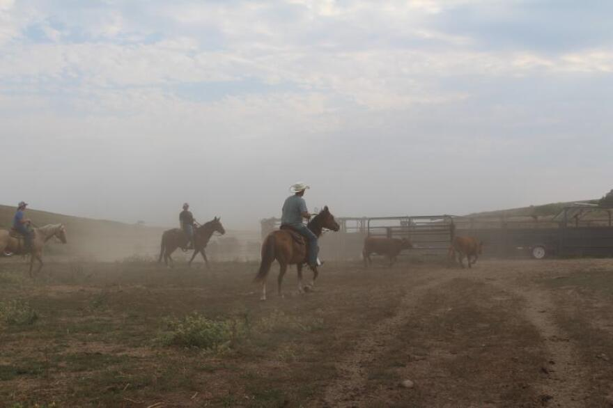 At the start of the coronavirus pandemic, farmers and economists say the food system fielded ranchers a one-two punch that triggered huge market disruptions and losses.