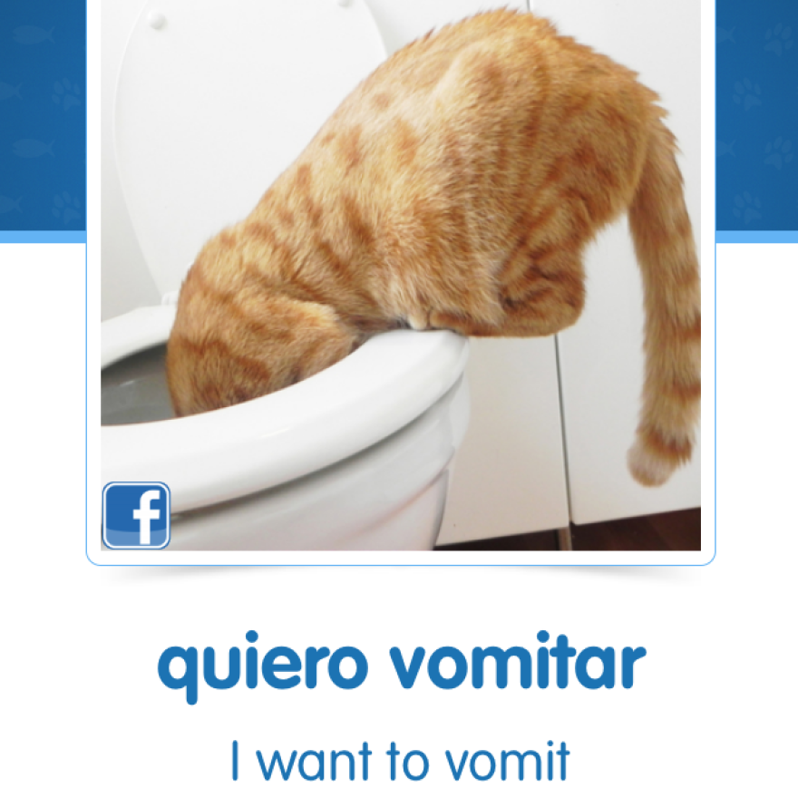 A screen shot from Cat Spanish, a new app by online learning company Memrise.
