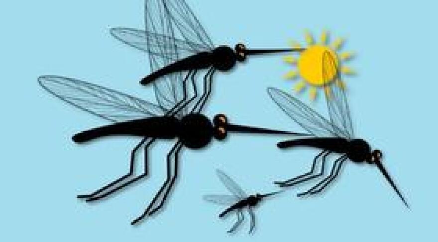 MosquitoSunDOH0829.jpg