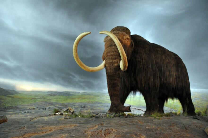 Woolly_mammoth_0.jpg