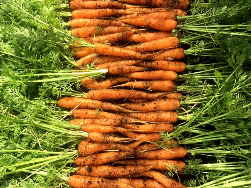 Carrots from Dayton Urban Grown, a training farm on Xenia Avenue in the city. Founder Lisa Helm says the classes she offers have been packed since the pandemic reached America.