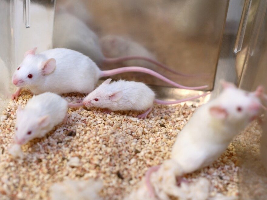 The EPA says it aims to eliminate the testing of chemicals and pesticides in animals by 2035.