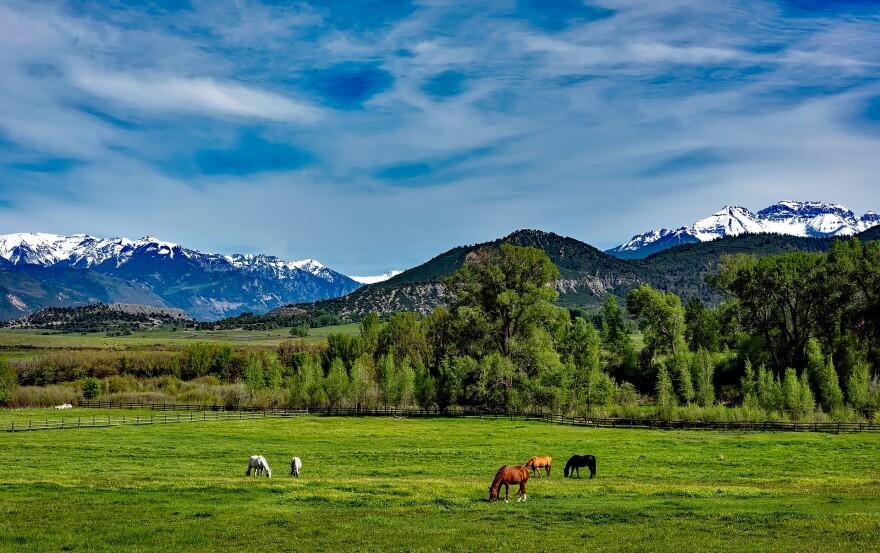 Horses in Colorado
