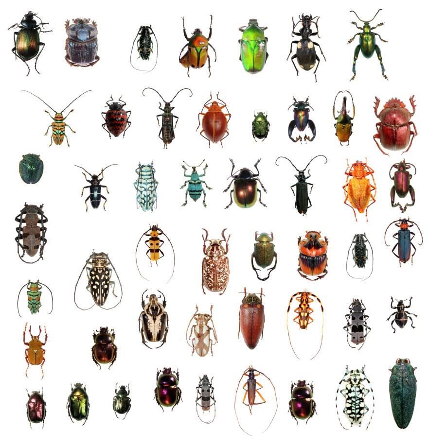 There is a seemingly never-ending variety of beetles, about 400,000 known species!