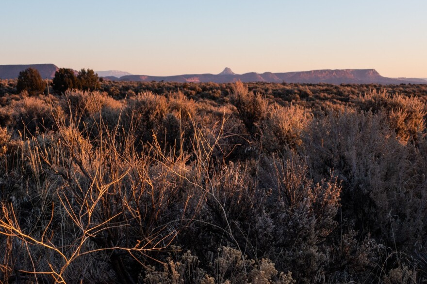 A field of sagebrush glows in the morning light. A mesa rises in the background.