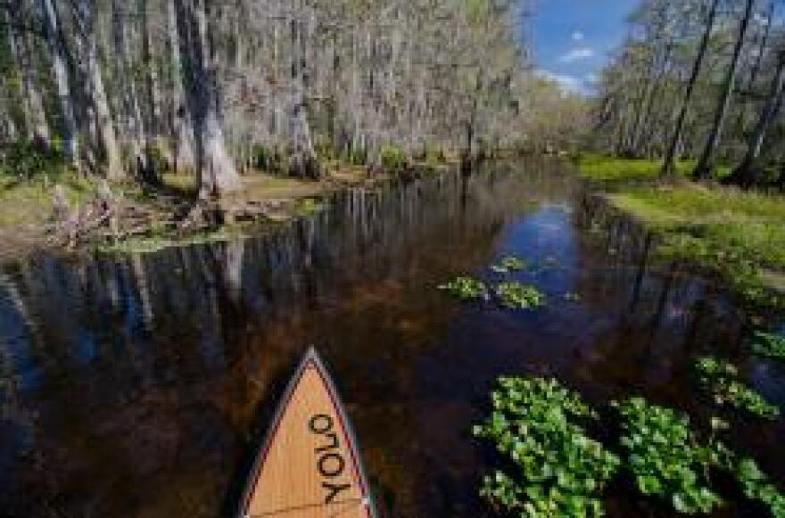 A paddler's-eye view of Fisheating Creek