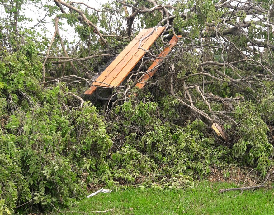 Tree damage following 2019's Memorial Day Tornadoes