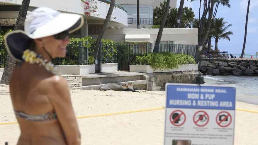 A beachgoer checks out a a Hawaiian monk seal and her newborn pup on a Waikiki beach in Honolulu. The endangered species usually does not pick a busy tourist site to give birth.