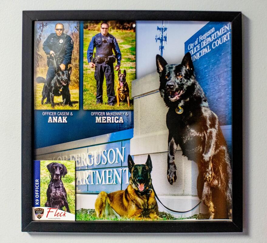 Collage of drug task force dogs