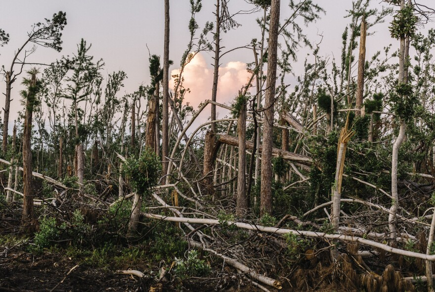 The Florida Panhandle is a heavily forested region. The hurricane tore down millions of trees.