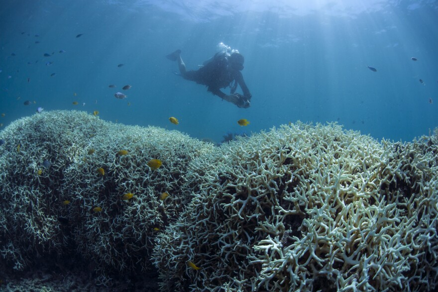 IYORBank_CoralBleaching_TheOceanAgency_59.jpg