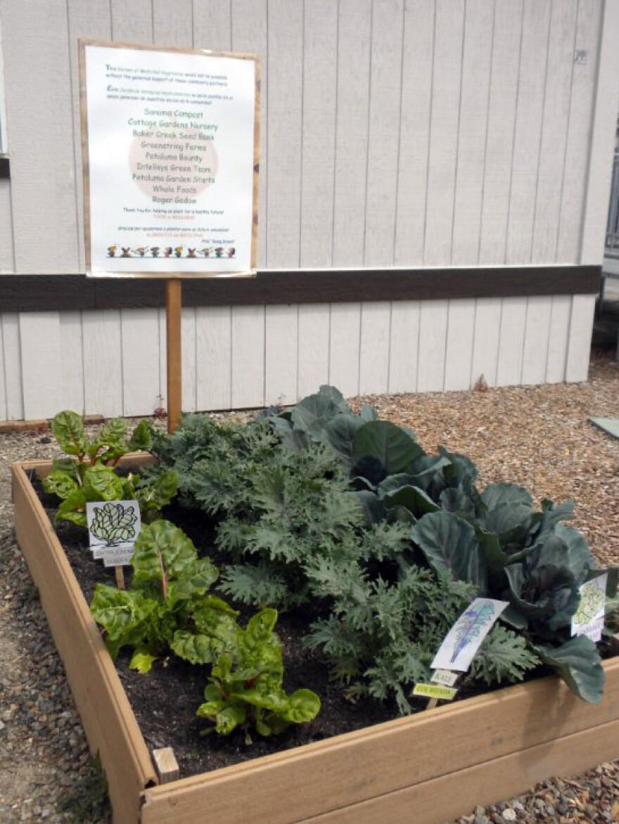 Gardening for health in Petaluma, Calif.