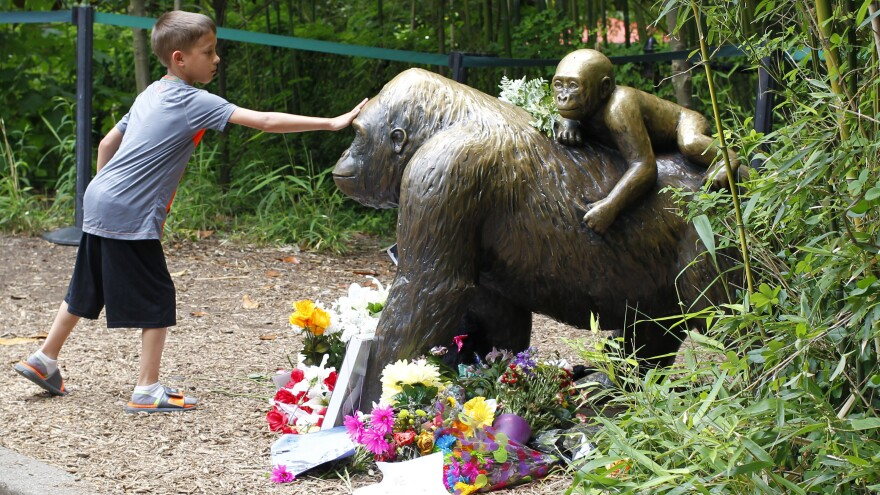 The mother of a 3-year-old boy was not negligent when he fell into part of the Cincinnati Zoo's Gorilla World exhibit, officials say. Here, a boy touches a bronze statue at the zoo that became something of a memorial in the days after the gorilla was shot and killed to protect the boy who fell into its enclosure.