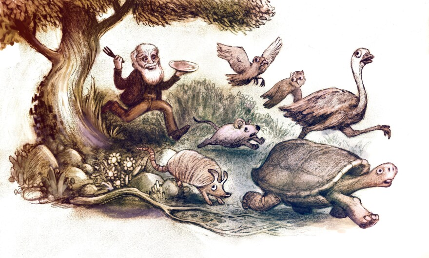 """Scientists who eat the plants and animals they study are following in the tradition of Charles Darwin. During the voyage of The Beagle, he ate puma (""""remarkably like veal in taste""""), iguanas, giant tortoises, armadillos. He even accidentally ate part of a bird called a lesser rhea, after spending months trying to catch it so that he could describe the species."""