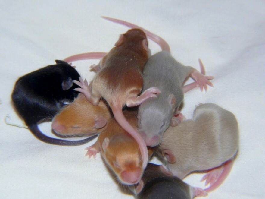 A variety of mice are shown in this undated image.