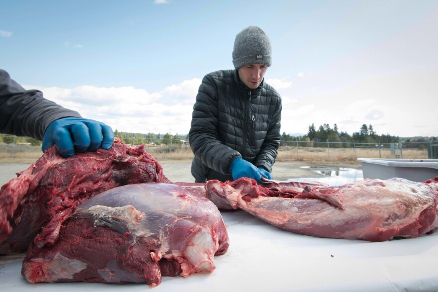 Reporter Nate Hegyi helps butcher an elk during a hunting workshop in McCall, Idaho.
