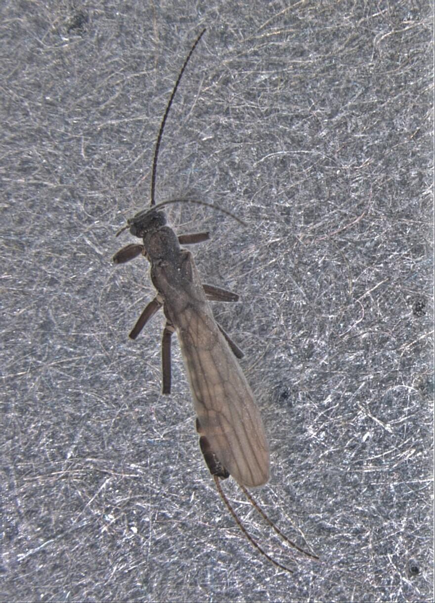 snowfly.jpg