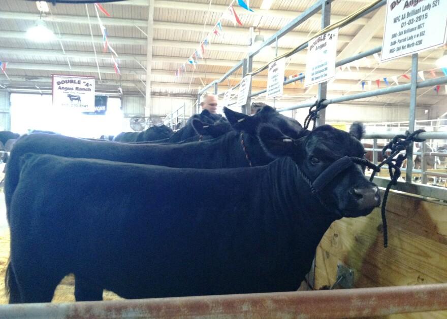fair_cattle.jpg