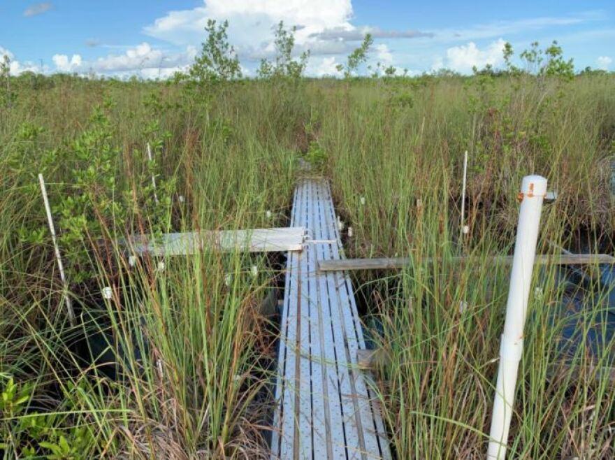 wetlands_staletovich_011321.JPG