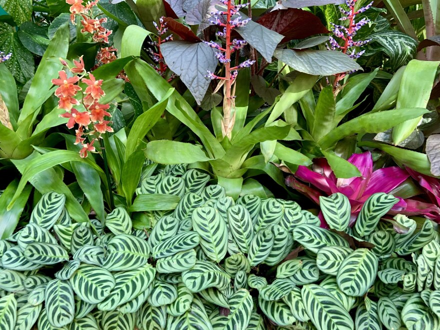 Green, orange and pink plants