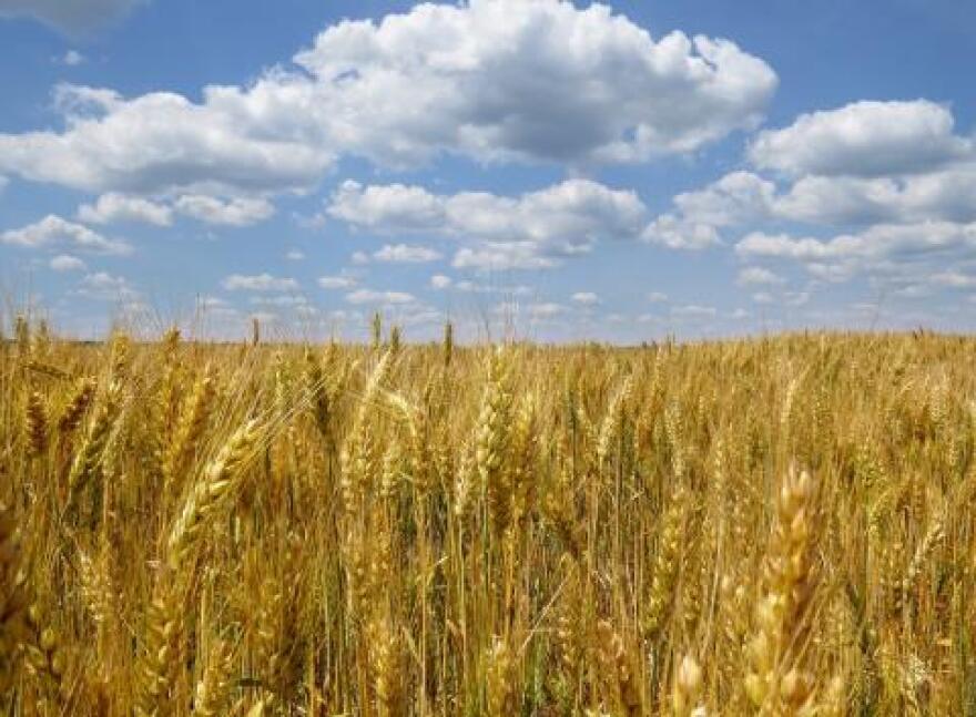 090214_ukraine-wheat_0.jpg