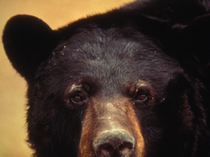 Perhaps not the sight you want to see when you come home: A black bear.
