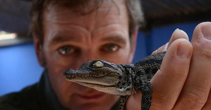 Operation Maneater: Crocodile