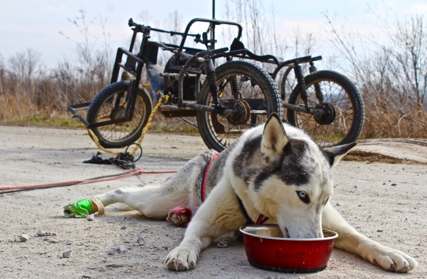 Mikko chows down after a practice run on the Katy Trail. January 2017