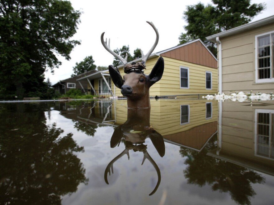 A lawn deer's head remains above the flood waters from the Souris River in an evacuated western neighborhood of Minot, N.D. About one-fourth of the city's 40,000 residents have evacuated their homes.