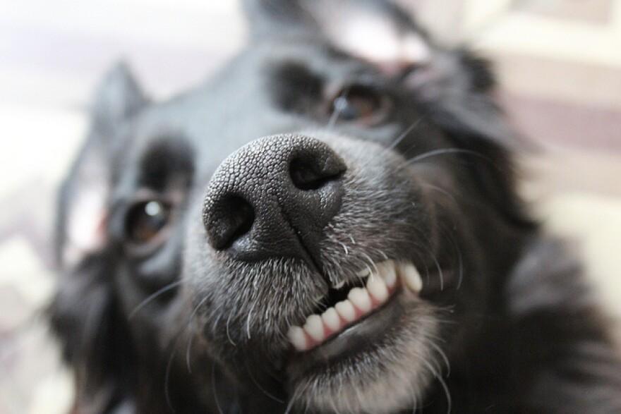 Dangerous Dog.jpeg