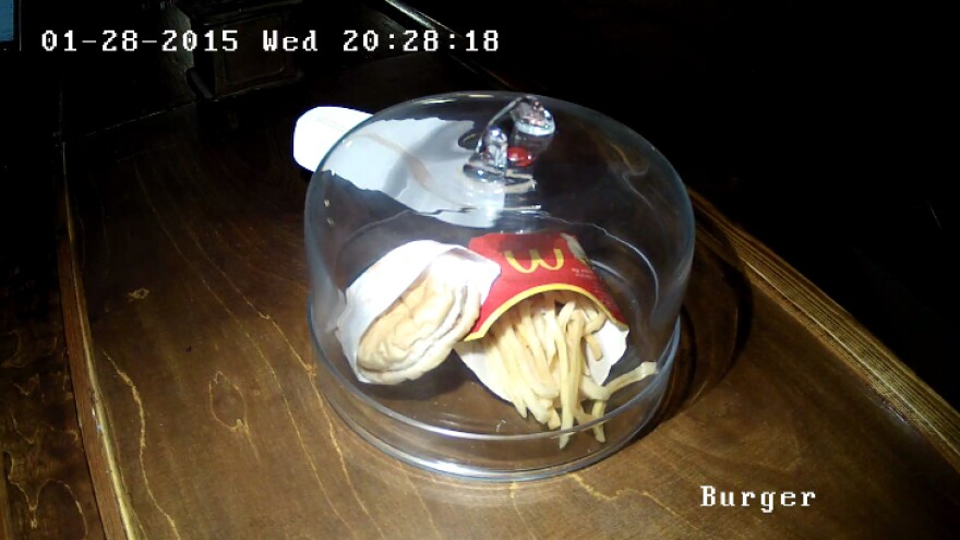 "An exhibit called ""The last McDonald's hamburger in Iceland"" now has a webcam devoted to it. The burger was purchased in 2009."