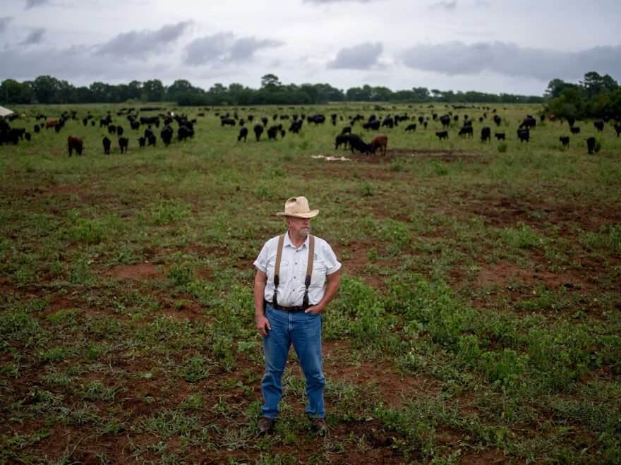 Will Harris stops to check on a herd of cattle on his farm, White Oak Pastures. The consulting firm Quantis conducted a carbon footprint evaluation of the farm and found its pastures could be capturing more carbon than its cows are emitting. When grass is allowed to grow on the pastures, it puts down deep roots, storing carbon in the soil that it draws out of the atmosphere.